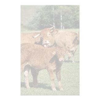 Une vache du Limousin donnant à son veau un lavage Papier À Lettre Personnalisé