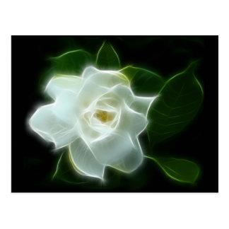 Usine blanche de fleur de gardénia carte postale