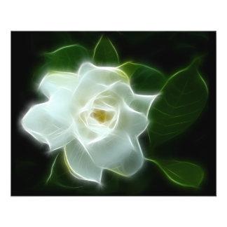 Usine blanche de fleur de gardénia prospectus 11,4 cm x 14,2 cm