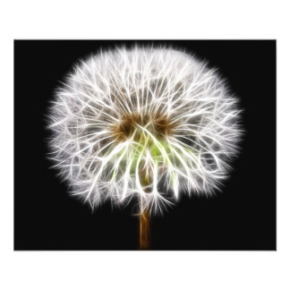 Usine blanche de fleur de pissenlit prospectus 11,4 cm x 14,2 cm
