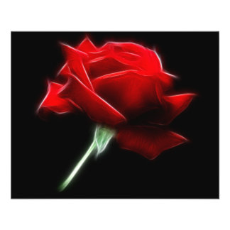 Usine de fleur de rose rouge prospectus 11,4 cm x 14,2 cm