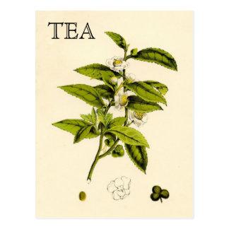 Usine de thé vintage carte postale