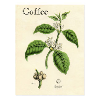 Usine vintage de café carte postale