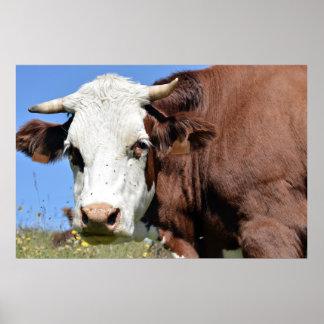 Vache à Abondance dans les Alpes français Affiche