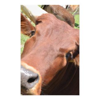 Vache à Brown de safari
