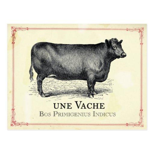 Vache à Vache Cartes Postales