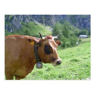 Vache alpine cartes postales