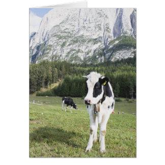 Vache dans un pré, Fie Sciliar Allo, alto l'Adige, Carte De Vœux