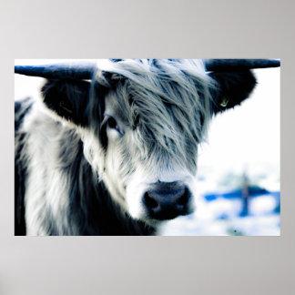 Vache des montagnes affiche
