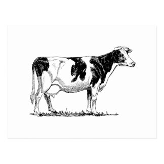 Vache du Holstein Carte Postale