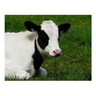 Vache du Holstein sur la carte postale d'herbe