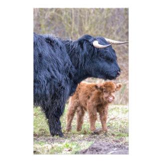 Vache écossaise noire à mère de montagnard avec papier à lettre customisé