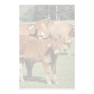 Vache et veau du Limousin Papier À Lettre