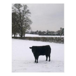 Vache noire en carte postale de neige