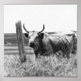 Vache noire et blanche à photo posters