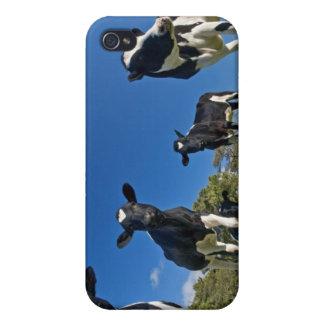 Vaches alimentant sur le pâturage coque iPhone 4/4S