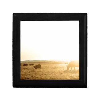 Vaches au lever de soleil sur les prairies petite boîte à bijoux carrée