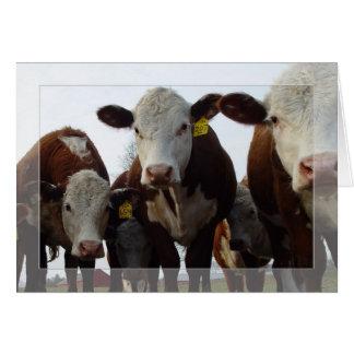Vaches curieuses 1 carte