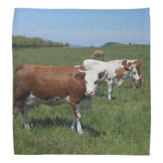 Vaches dans le pâturage bandana