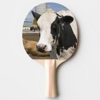 Vaches devant une grange et un silo rouges à une raquette tennis de table