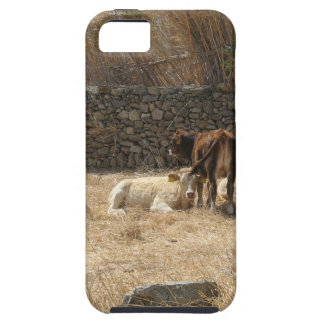 Vaches iPhone 5 Case