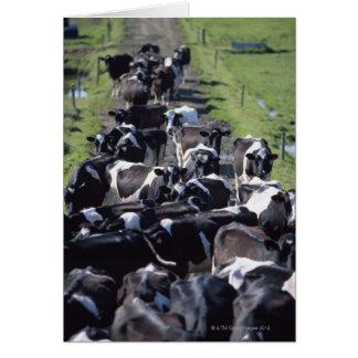 Vaches laitières de Fresian, attendant la traite, Cartes