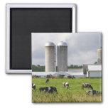 Vaches laitières et ferme près du comté de Taylor  Aimant Pour Réfrigérateur