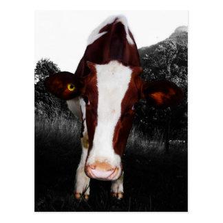 Vaches - pas toujours noires et blanches carte postale