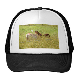 VACHES QUEENSLAND RURAL AUSTRALIE CASQUETTE