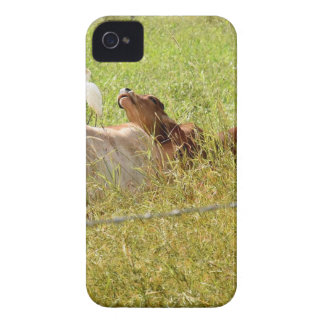 VACHES QUEENSLAND RURAL AUSTRALIE COQUES iPhone 4 Case-Mate