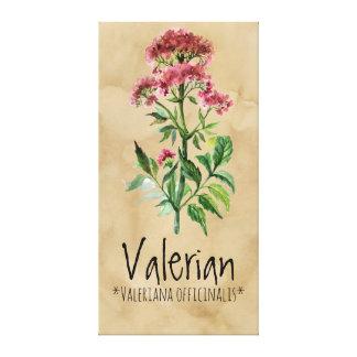 """Valériane magique 21,29"""" de plantes x 42,05"""" toile"""