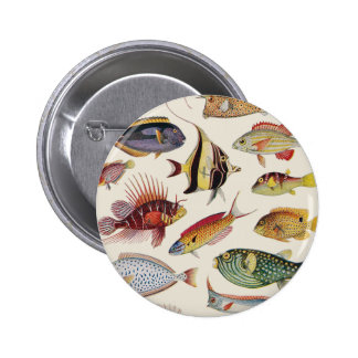 Variétés de poissons pin's