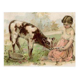 Veau de alimentation de fille vintage de pays carte postale
