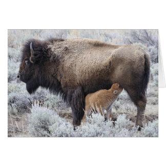 Veau de bison de soins de vache, Yellowstone 2 Carte De Vœux