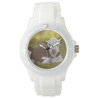 Veau se reposant dans le paysage rural montres bracelet