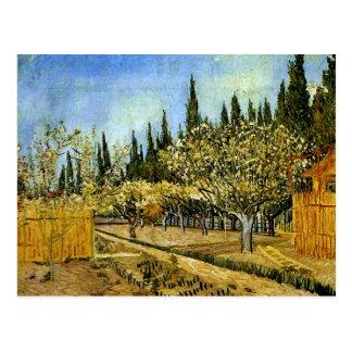 Verger dans la fleur, cyprès, Vincent van Gogh Carte Postale