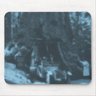 Verger de Maraposa de lanterne magique d arbre de Tapis De Souris
