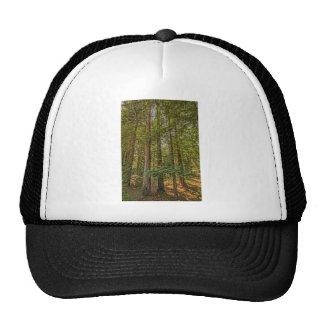 Verger de séquoia casquettes de camionneur