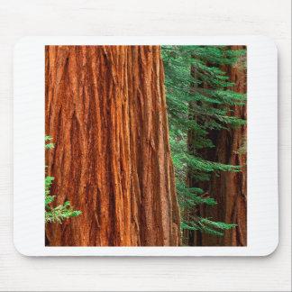 Verger Yosemite de Mariposa de séquoia géant d arb Tapis De Souris