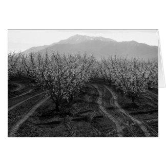 Vergers à interdire les tailles, Mt. San Jacinto, Carte De Vœux