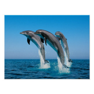 Vers le haut des dauphins hauts hauts posters