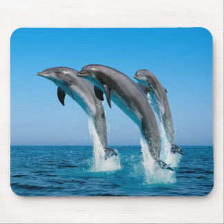 Vers le haut des dauphins hauts hauts tapis de souris