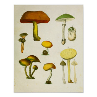 Vert 1839 jaune d'impression d'art de champignons poster