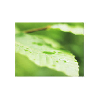 Vert d'impression de photo de baisse de pluie de toile