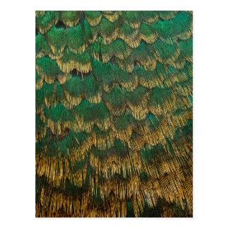 Vert et plumes de faisan d'or carte postale