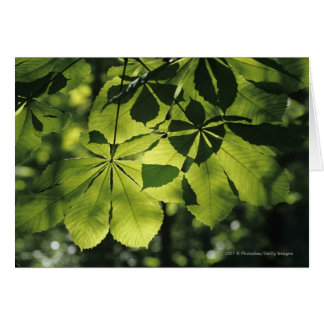 Vert sept feuilles de point avec l'illumination de carte de vœux