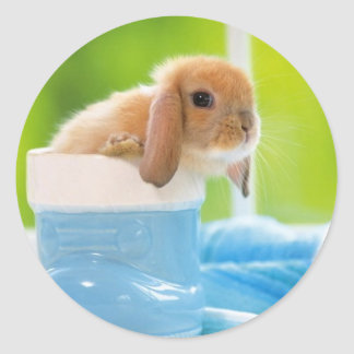 verts bleus de LAPIN de BÉBÉ de 20_baby_animals Sticker Rond