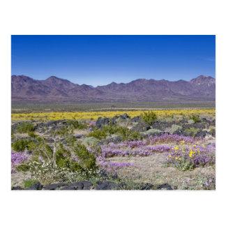 Verveine de sable et or de désert au cratère carte postale