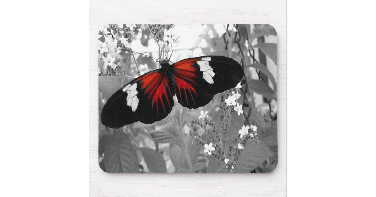 Victoire de papillon noir et rouge de recolor p109 tapis for Surface minimum bureau code du travail