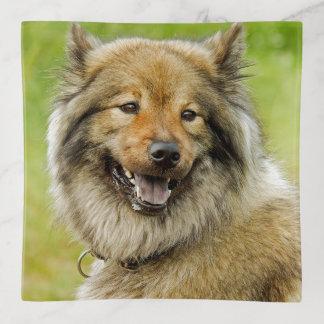 Vide-poche Eurasien, milieu, spitz-comme, chien